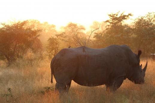 Top 7 safaris