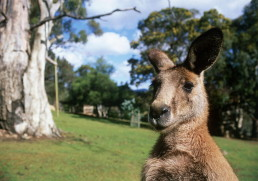 Visit the wild side of Australia
