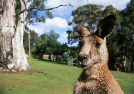 Visit the wild side of Australia