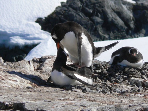 What to expect when cruising to the North or South Poles