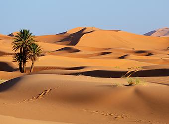 AdobeStock_76582576-morocco-snippet
