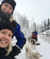 Husky Sled Levi - Finnish Lapland