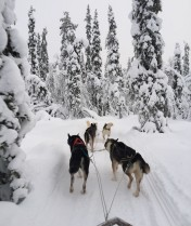 Driving our own Husky sled - Levi Finnish Lapland