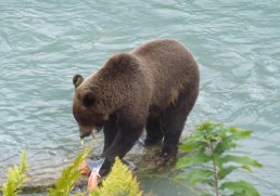 Alaska - So much more than just a cruise!