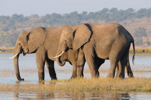 Botswana & Victoria Falls Explorer
