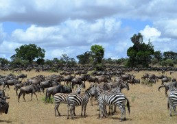 Migrating to the Serengeti