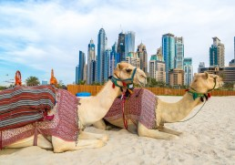 A to Z Guide to Dubai