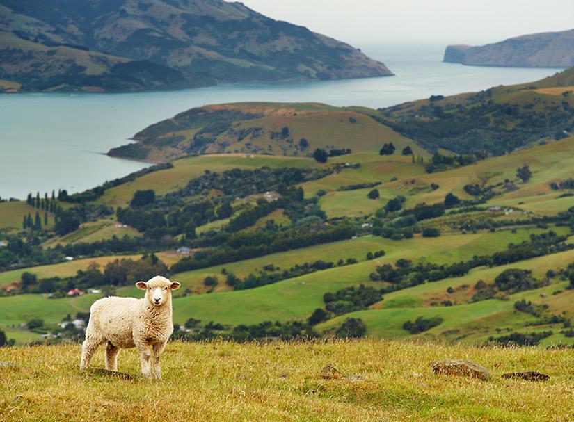 New Zealand's Big 5