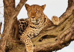 African Animal Experiences