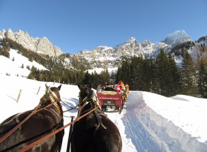 Horse-and-Carriage-ride-510x375