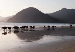 Lombok Lover