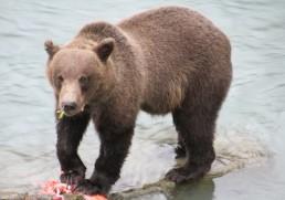 Alaska Uncovered