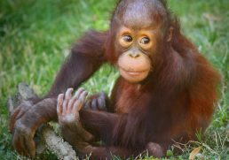 What You Should Know About Ethical Animal Encounters