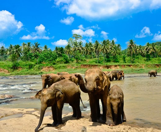 Beginner's Guide to Sri Lanka