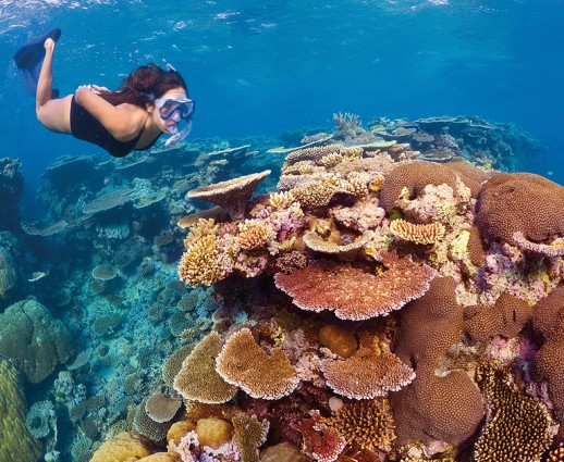 The Gems of the Great Barrier Reef