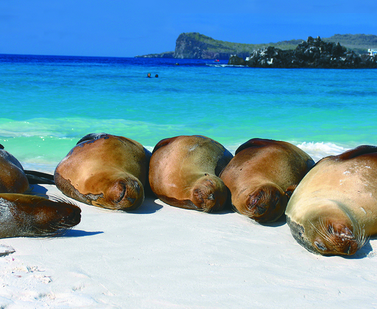 Beginners' Guide to the Galápagos Islands