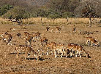 Wildlife Tour of India | TravelManagers