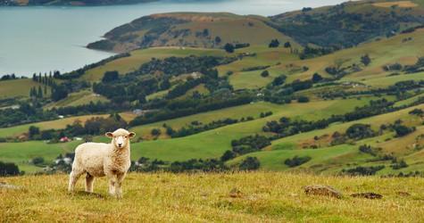 New Zealand Nature | TravelManagers