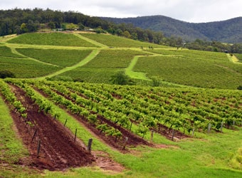 Vineyards in the Hunter Valley, New South Wales, Australia