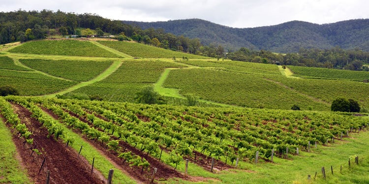 Places to Visit in NSW: Vineyards in the Hunter Valley, NSW, Australia