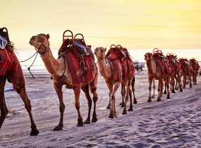 Camels on Cable Beach, Broome, Western Australia | TravelManagers Australia