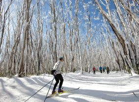 Skiing at Lake Mountain Alpine Resort, Victoria, Australia | TravelManagers Australia