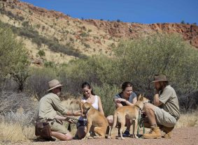 Dingo encounter, Alice Springs Desert Park. Image credit: Tourism NT/Shaana McNaught