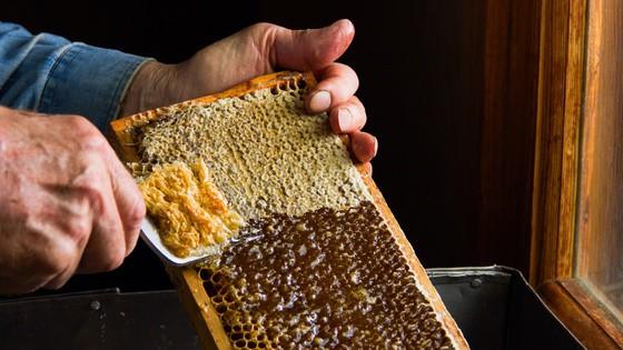 Buzzstop Bee & Honey Centre – Queenstown
