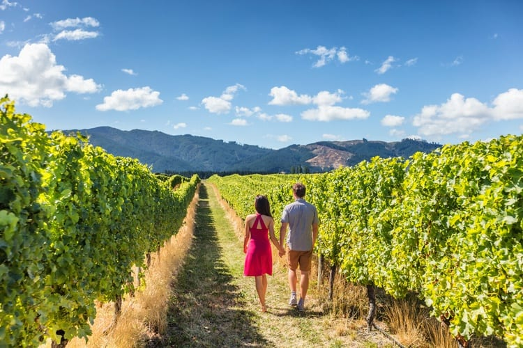 Your Complete Guide to New Zealand's South Island Wine Regions