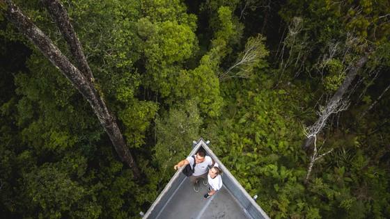 West Coast Treetop Walk – Hokitika