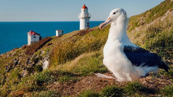 Otago Harbour Cruise – Dunedin
