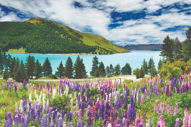 9 Stops That Will Take Your Breath Away on a South Island NZ Road Trip