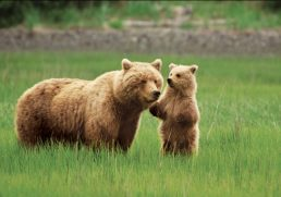 Take the Alaskan Shore Excursion of Your Dreams with the Alaskan experts